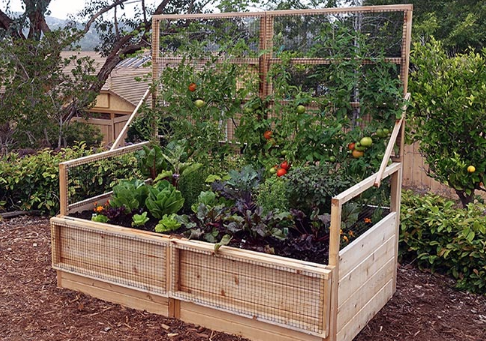 Outdoor Living Today - 6x3 Raised Garden Bed with Trellis Lid | Epic